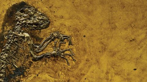 NHM, Ida, fossil
