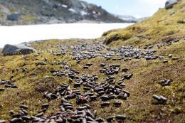 Lemenbæsj på fjellet ved Finse.